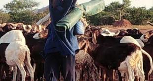 La mobilité est l'une des principales caractéristiques de la pratique de l'élevage au Burkina Faso.